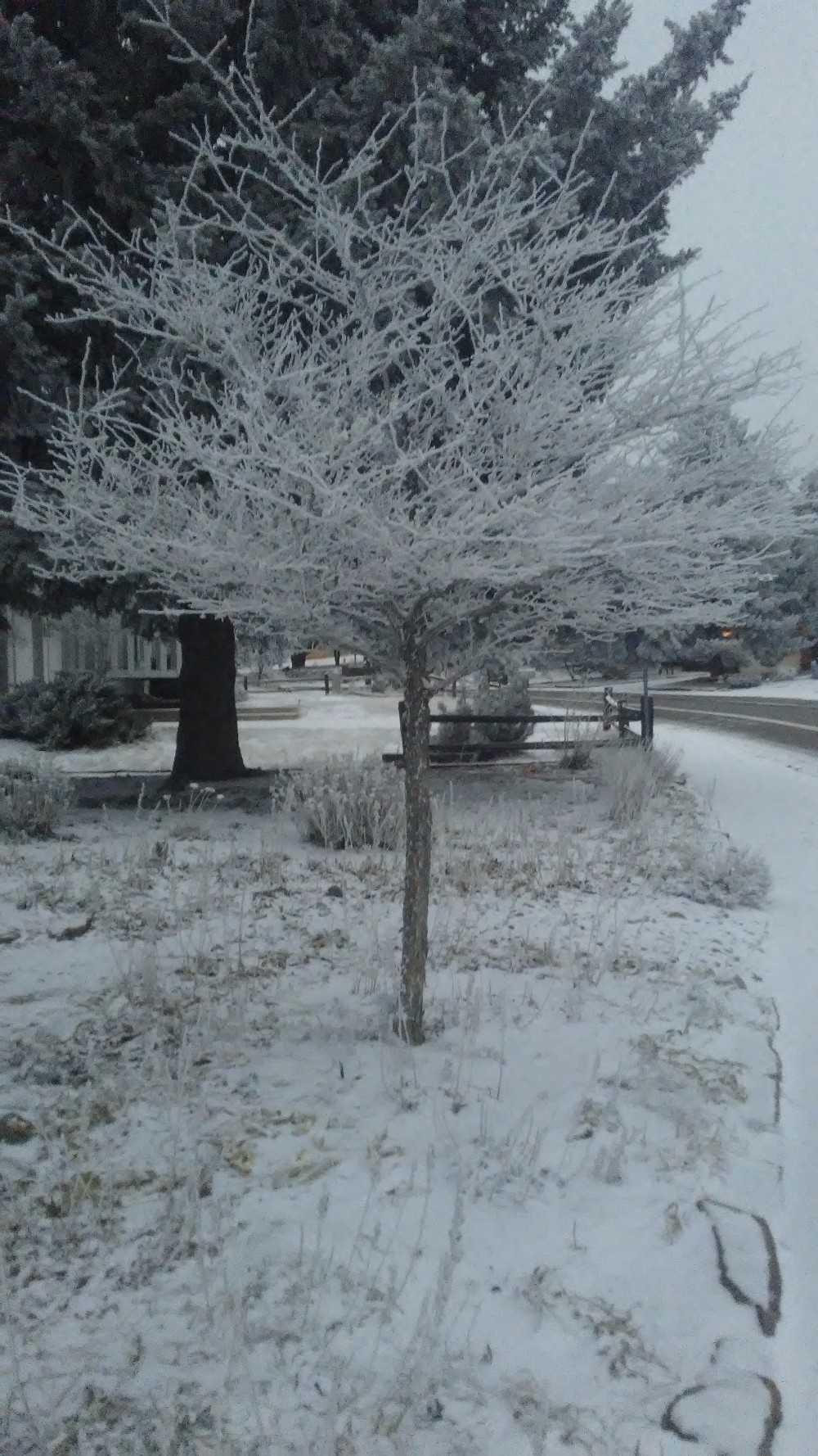 Snowy Colorado