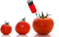 Genetically Modifying Our Diets