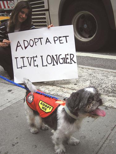 Dog adoption. Photo via Flickr.com under the Creative Commons Lisence. https://www.flickr.com/photos/sayheypatrick/1140020132