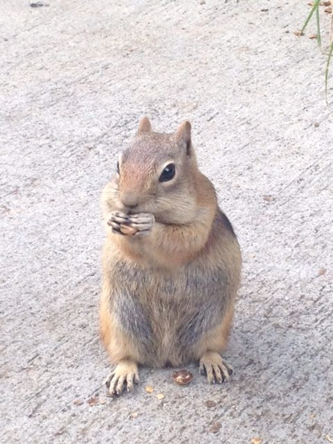 A squirrel eating a nut in the courtyard