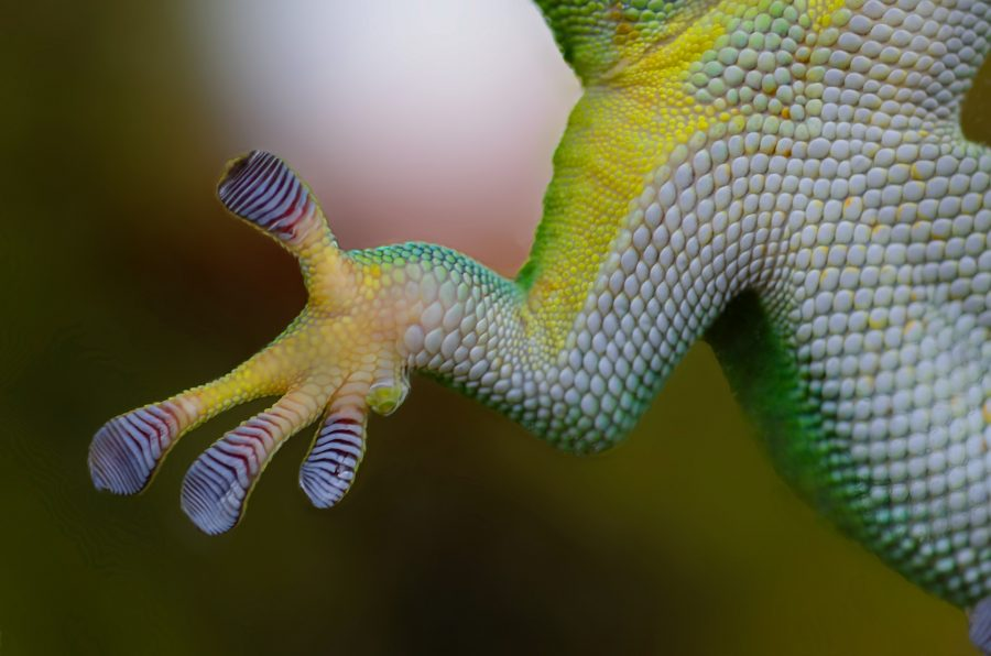 Gecko Feet. Labeled for reuse by pixabay.