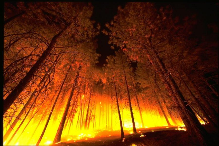 A fire rages through a forest. Via Wikimedia under Public Domain
