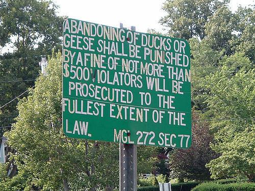 13 Of The Weirdest Laws In The Usa The Jetstream Journal
