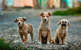 Photo via Pixabay labeled for reuse under the creative commons license. (https://pixabay.com/en/dogs-puppies-pet-animal-cute-984015/)