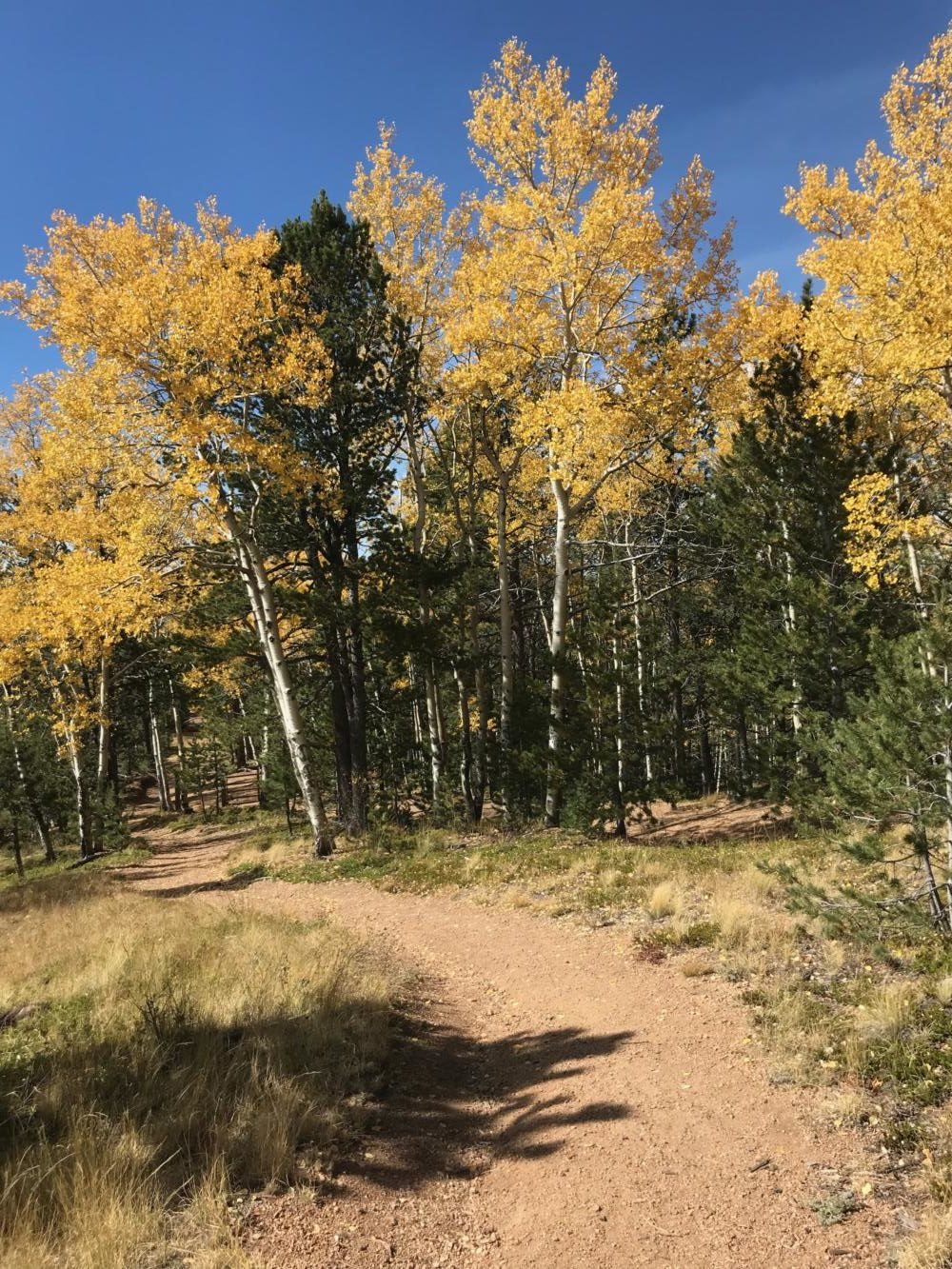 Hiking in fall in Colorado is the best!!