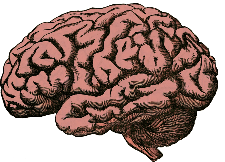 The+brain+can+develop+disorders+as+coping+mechanisms+to+trauma.+%28Brain+Anatomy+Human+Pixabay%2C+labeled+for+reuse%29.+