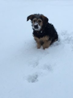 AAHS student's dog, Riley, plays in the snow storm.