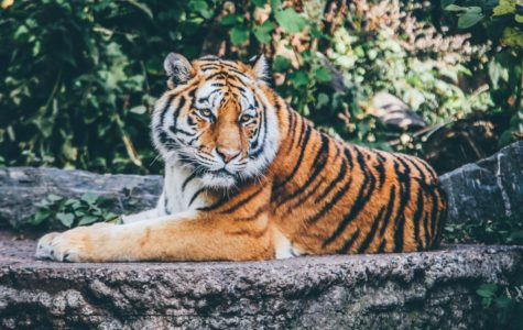 Endangered Animals: Conservation Efforts, Success Stories and How to Help