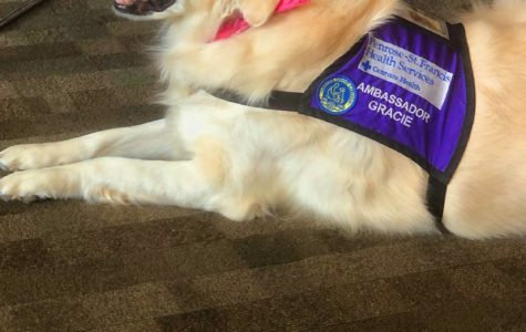 Man's Best Friend and Doctor: Dave Calvano is Training Service Dogs