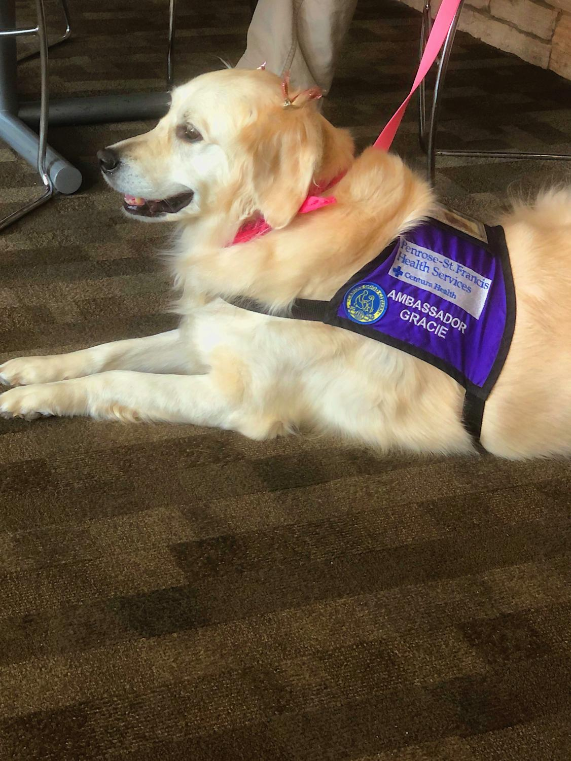 Gracie, a service dog at St. Francis Medical Center, lays quietly while waiting to meet another patient.