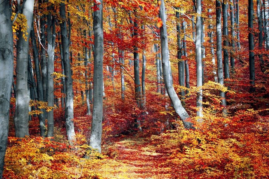 Licensed for creative reuse. A colorful autumn forest.