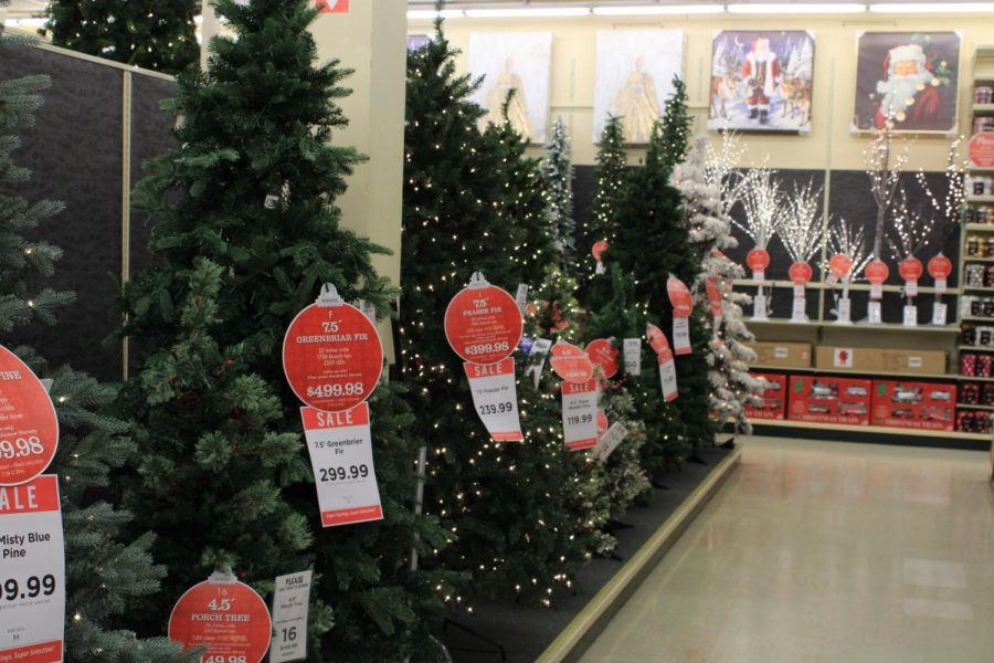 Christmas Trees lined up for sale in September